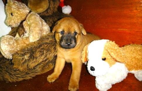 Haustiere mit Tipps für Haustiere, Tierärzte, Alternativ-Medizin, Ernährung, Haustierhaltung, Haustier-Versicherung